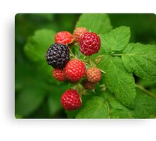 Mixed Berry Canvas Print