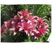 Lilies in Sunshine Poster