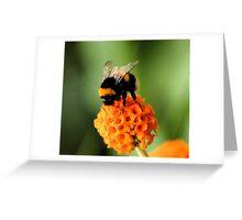 Mmm Orange Flavoured Pollen Greeting Card