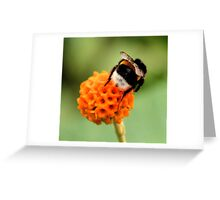 """""""Bum""""ble bee Greeting Card"""