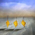Autumn dance by Veikko  Suikkanen