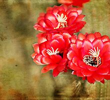 Desert Bloom by photecstasy