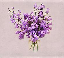 Jacaranda Bloom by photecstasy