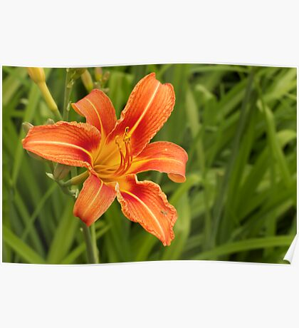 Day Lily - Part Deux Poster