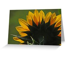 Sunflower backlit Greeting Card