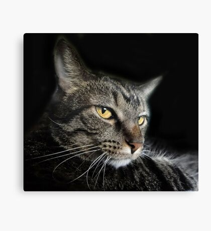 Sly Ally Canvas Print