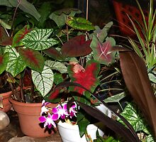 Pretty plants by ♥⊱ B. Randi Bailey