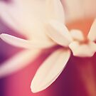 Smile Daisy by Rhana Griffin