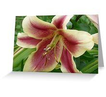 Gorgeous Lily Greeting Card