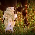 Grazing Cow by Mechelep