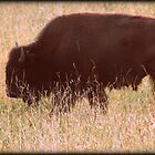 Buffalo Bill by Mechelep
