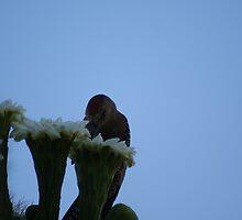 Nectar Anyone? by Kelly Leyba