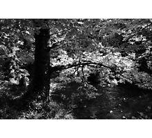 Sunshine softly Photographic Print