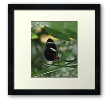Antiochus Longwing. Framed Print