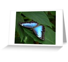 Blue Morpho #2. Greeting Card