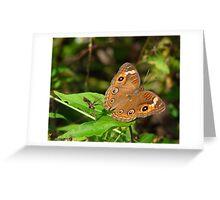 Buckeye. Greeting Card
