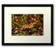 Crescent In Flight. Framed Print