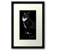 My gorgeous Smokey Framed Print
