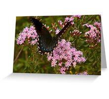 Orchard Swallowtail. Greeting Card