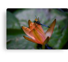 Blue Dragonfly Peach Waterlily Canvas Print