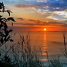 sunset over loop head with silhouetted wild tall grass  by morrbyte