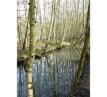 Silver birch trees by a side stream at Newmillerdam Photographic Print