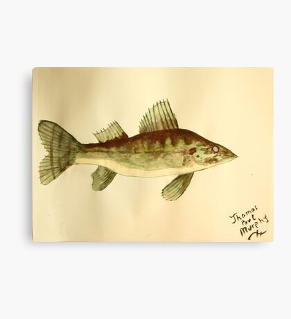 Walleye Canvas Print