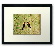 Brown Headed Cowbirds Framed Print