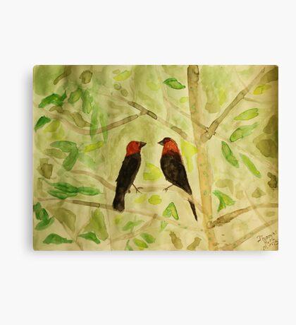 Brown Headed Cowbirds Canvas Print