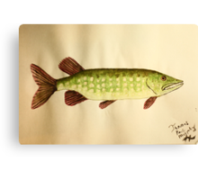 Northern Pike Canvas Print