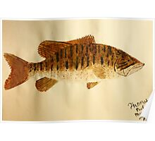 Smallmouth Bass Poster