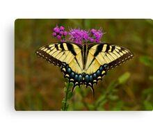 Yellow Tiger Swallowtail. Canvas Print