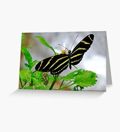 Zebra Longwing. Greeting Card