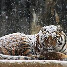 Blanket of Snow by Kyle McLeod