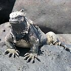 Iguana or Prehistory Survivor by Jola Martysz