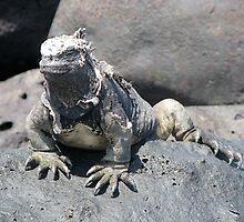 Iguana or Prehistory Survivor by Jola Martysz