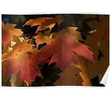 Fall color leaves Poster
