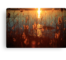 Let them shine. Canvas Print