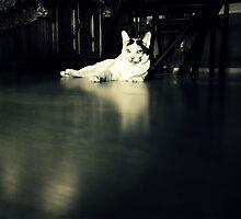 Ameli by Scott Mitchell