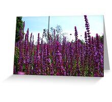 Knee deep in purples Greeting Card