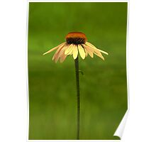 Golden Coneflower Poster