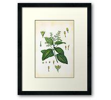 Flora3  Framed Print
