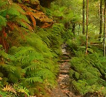 Canyon walk at Blackheath by Michael Matthews