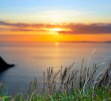 sunset over loop head with the wild tall grass by morrbyte