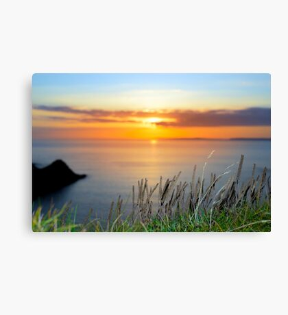 sunset over loop head with the wild tall grass Canvas Print