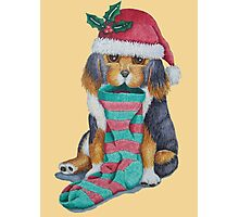 cute black and brown puppy with christmas stocking Photographic Print