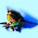 fly by NicoleConrau