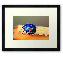 stink beetle Framed Print
