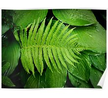 fern on top Poster
