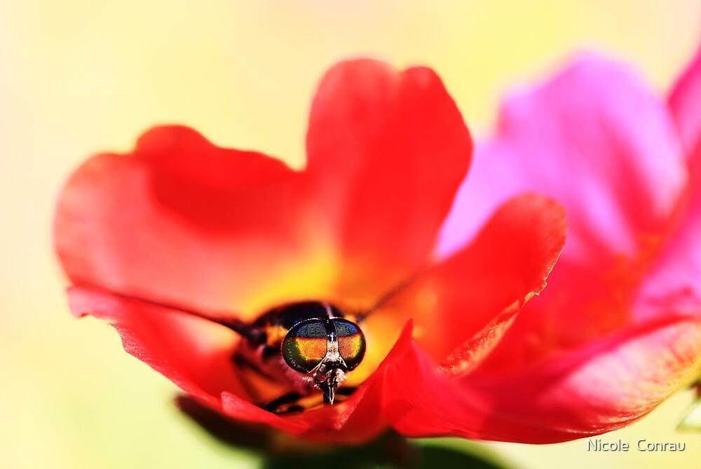flower fly by NicoleConrau